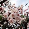 梅の名所 東京から日帰りのおすすめスポットは?